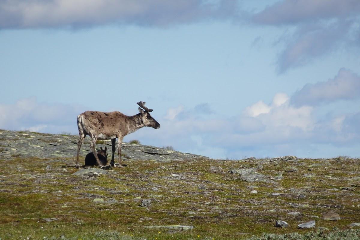 Hiking Jämtlandstriangeln